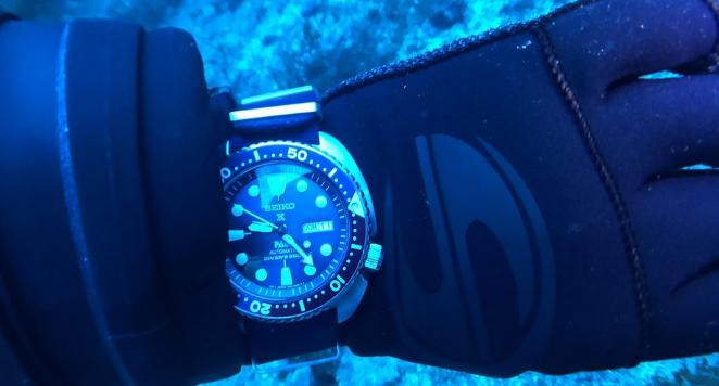 dive watch underwater
